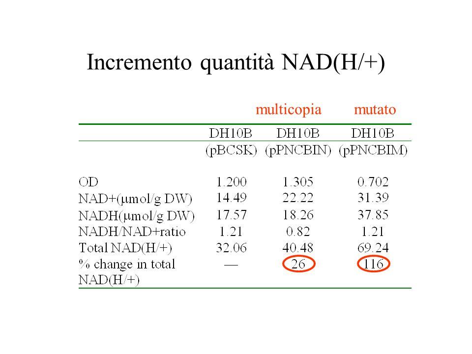 Incremento quantità NAD(H/+)