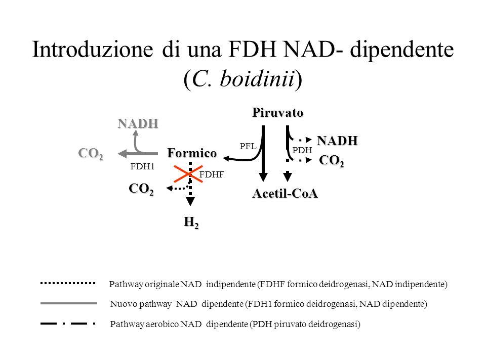 Introduzione di una FDH NAD- dipendente (C. boidinii)