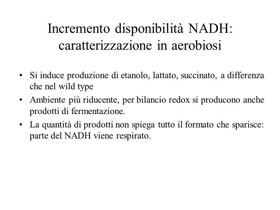 Incremento disponibilità NADH: caratterizzazione in aerobiosi