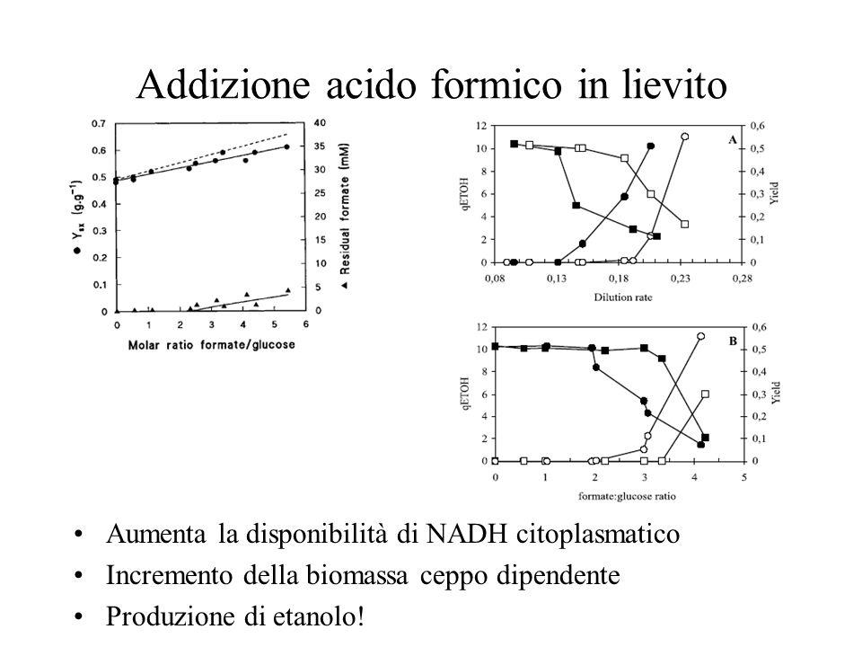 Addizione acido formico in lievito