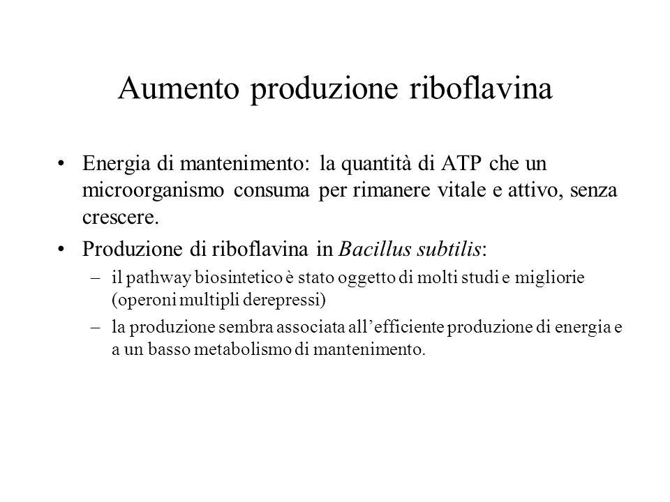 Aumento produzione riboflavina