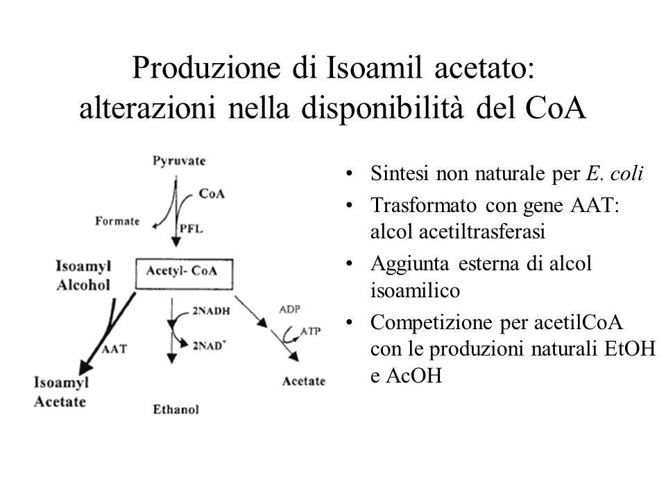 Produzione di Isoamil acetato: alterazioni nella disponibilità del CoA