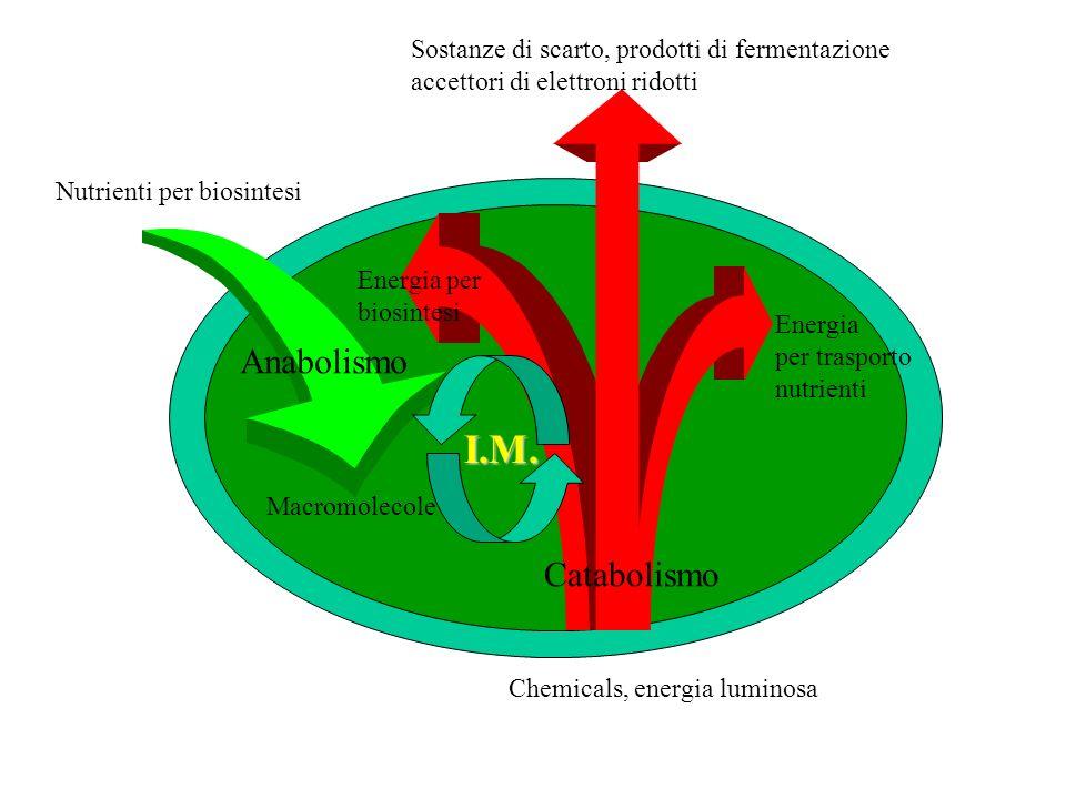I.M. Anabolismo Catabolismo