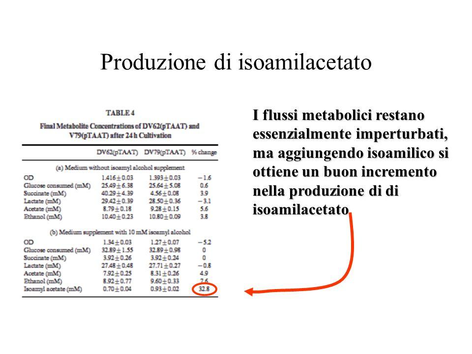 Produzione di isoamilacetato