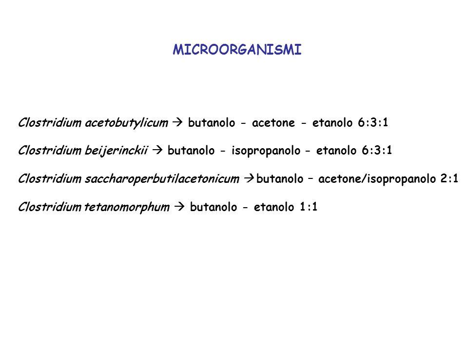 MICROORGANISMIClostridium acetobutylicum  butanolo - acetone - etanolo 6:3:1. Clostridium beijerinckii  butanolo - isopropanolo - etanolo 6:3:1.