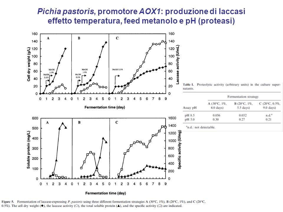 Pichia pastoris, promotore AOX1: produzione di laccasi