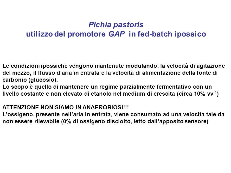 utilizzo del promotore GAP in fed-batch ipossico