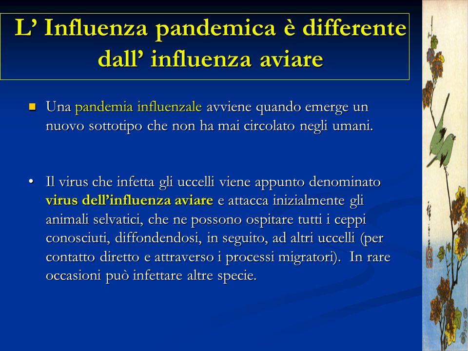 L' Influenza pandemica è differente dall' influenza aviare