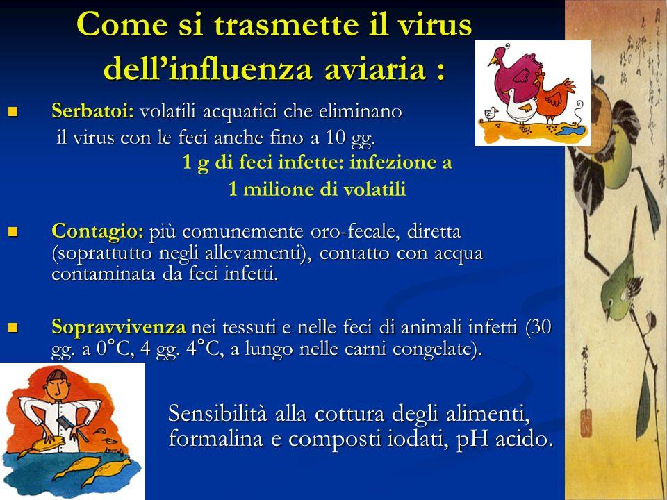 Come si trasmette il virus dell'influenza aviaria :