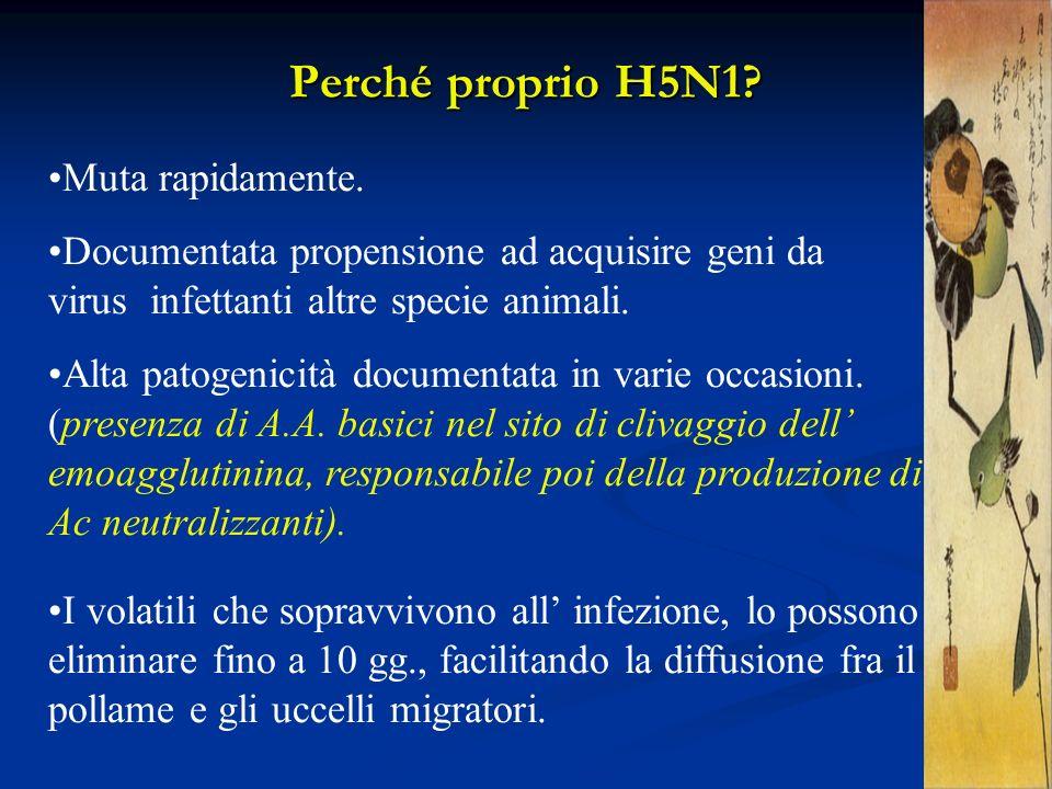 Perché proprio H5N1 Muta rapidamente.