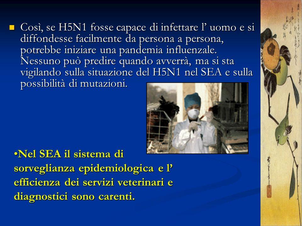 Così, se H5N1 fosse capace di infettare l' uomo e si diffondesse facilmente da persona a persona, potrebbe iniziare una pandemia influenzale. Nessuno può predire quando avverrà, ma si sta vigilando sulla situazione del H5N1 nel SEA e sulla possibilità di mutazioni.