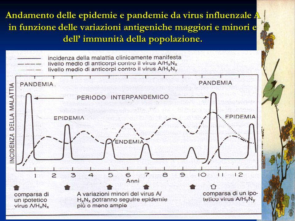 Andamento delle epidemie e pandemie da virus influenzale A in funzione delle variazioni antigeniche maggiori e minori e dell' immunità della popolazione.