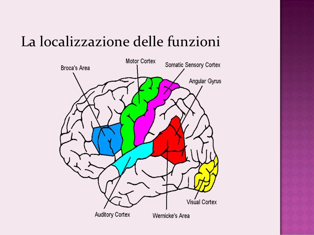 La localizzazione delle funzioni