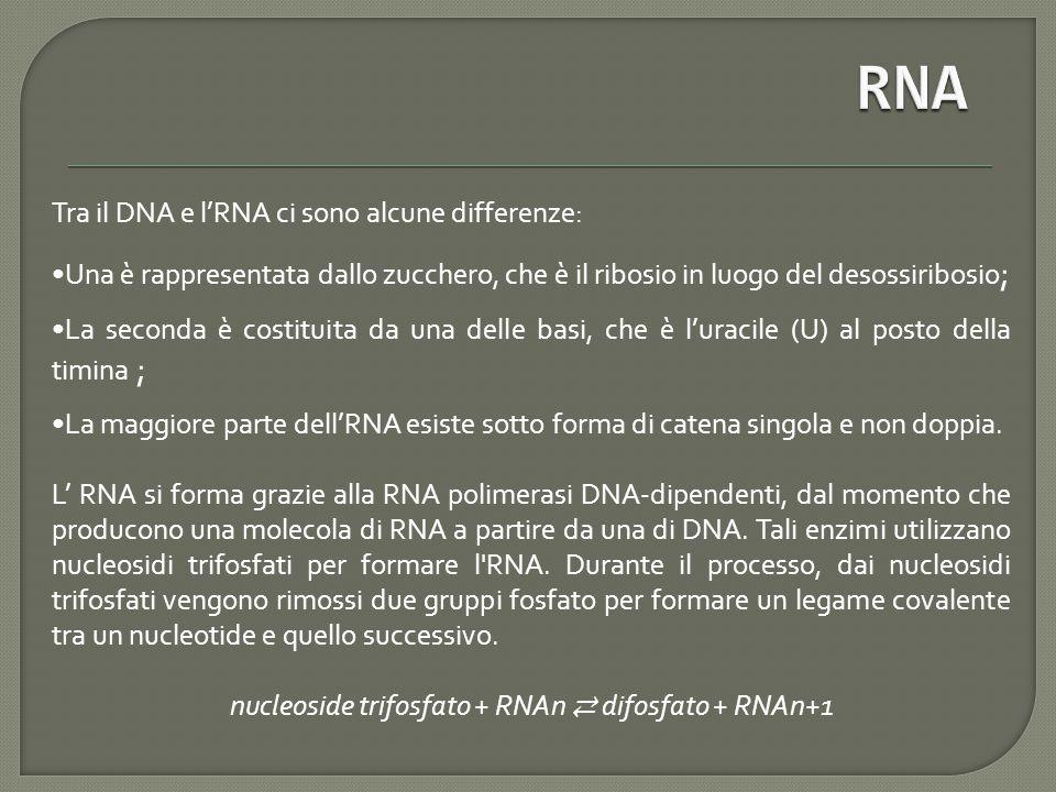 nucleoside trifosfato + RNAn ⇄ difosfato + RNAn+1