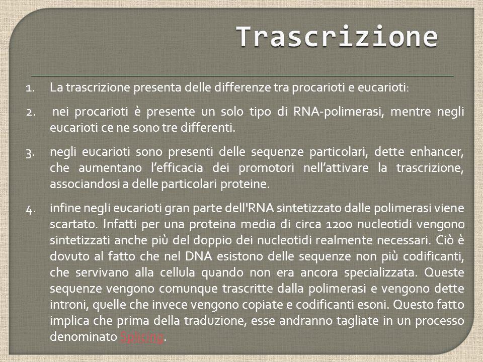 Trascrizione La trascrizione presenta delle differenze tra procarioti e eucarioti: