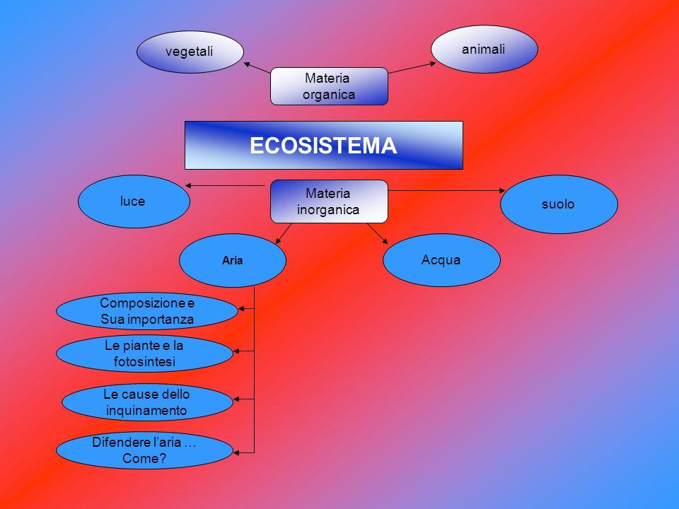 ECOSISTEMA animali vegetali Materia organica luce Materia suolo