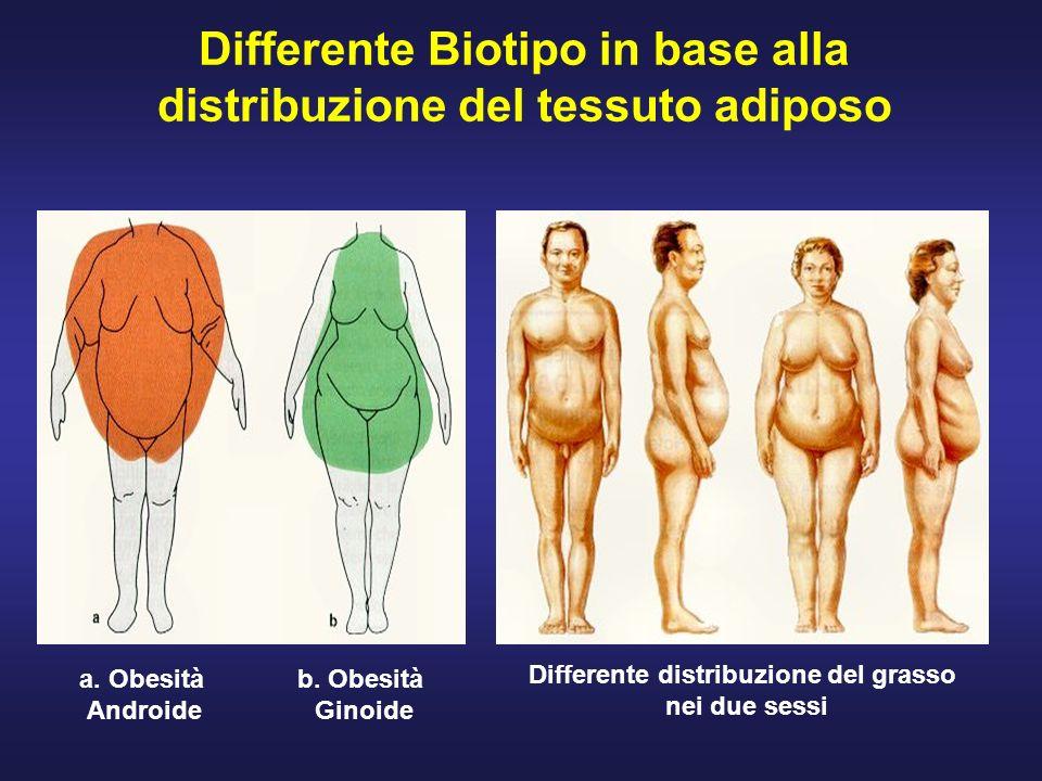 Differente Biotipo in base alla distribuzione del tessuto adiposo
