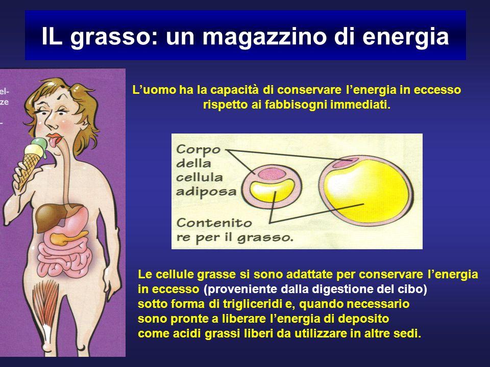 IL grasso: un magazzino di energia