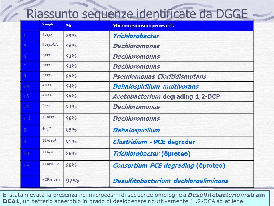 Riassunto sequenze identificate da DGGE