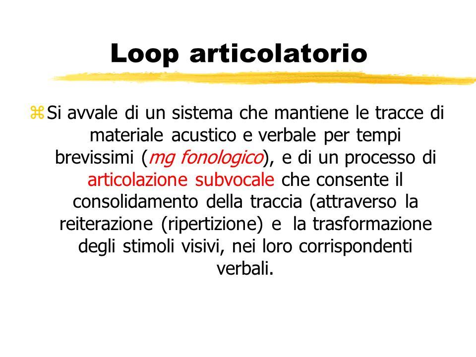 Loop articolatorio