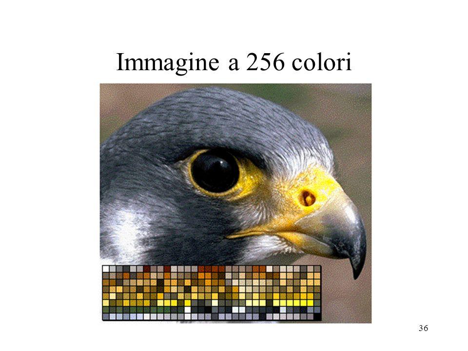 Immagine a 256 colori