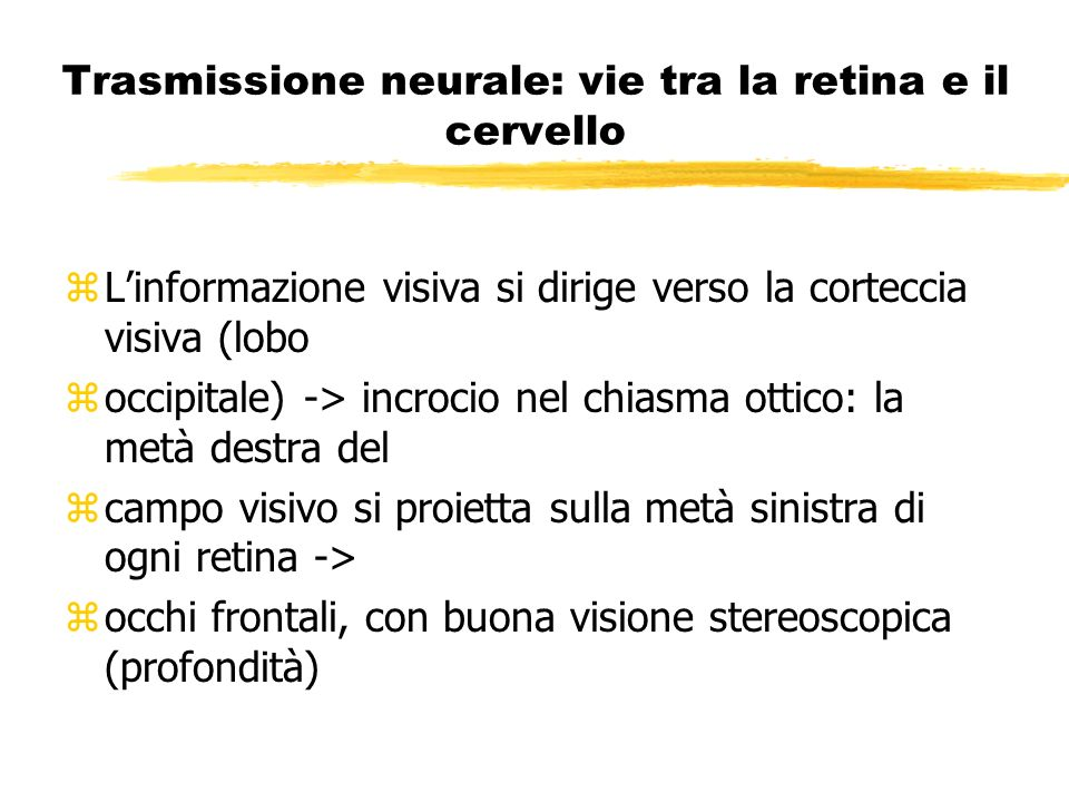 Trasmissione neurale: vie tra la retina e il cervello