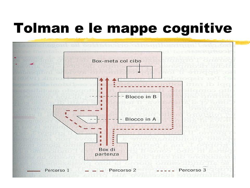 Tolman e le mappe cognitive