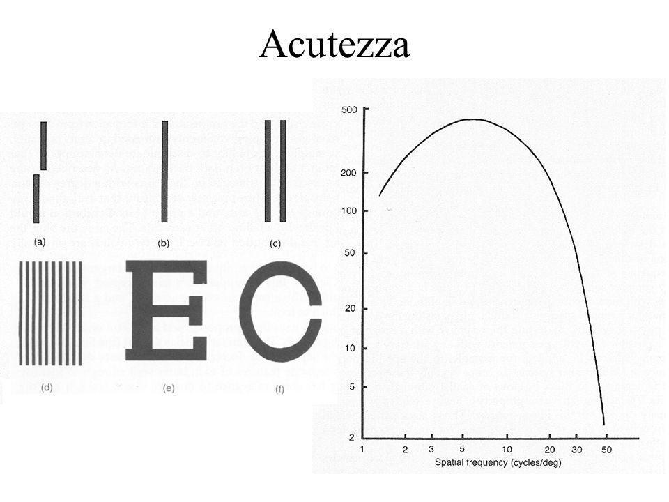 Acutezza