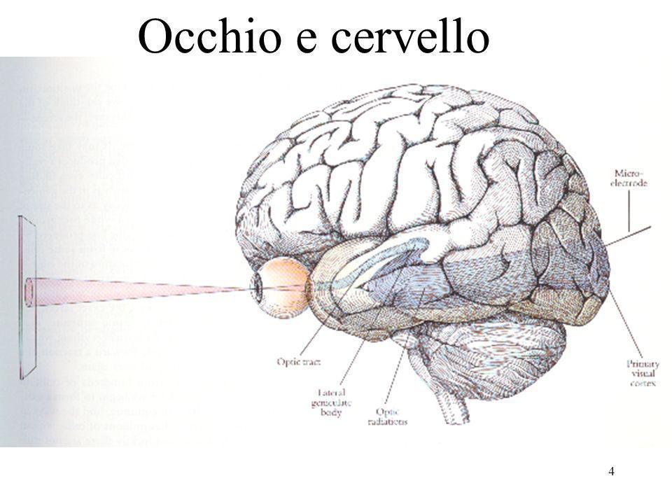 Occhio e cervello