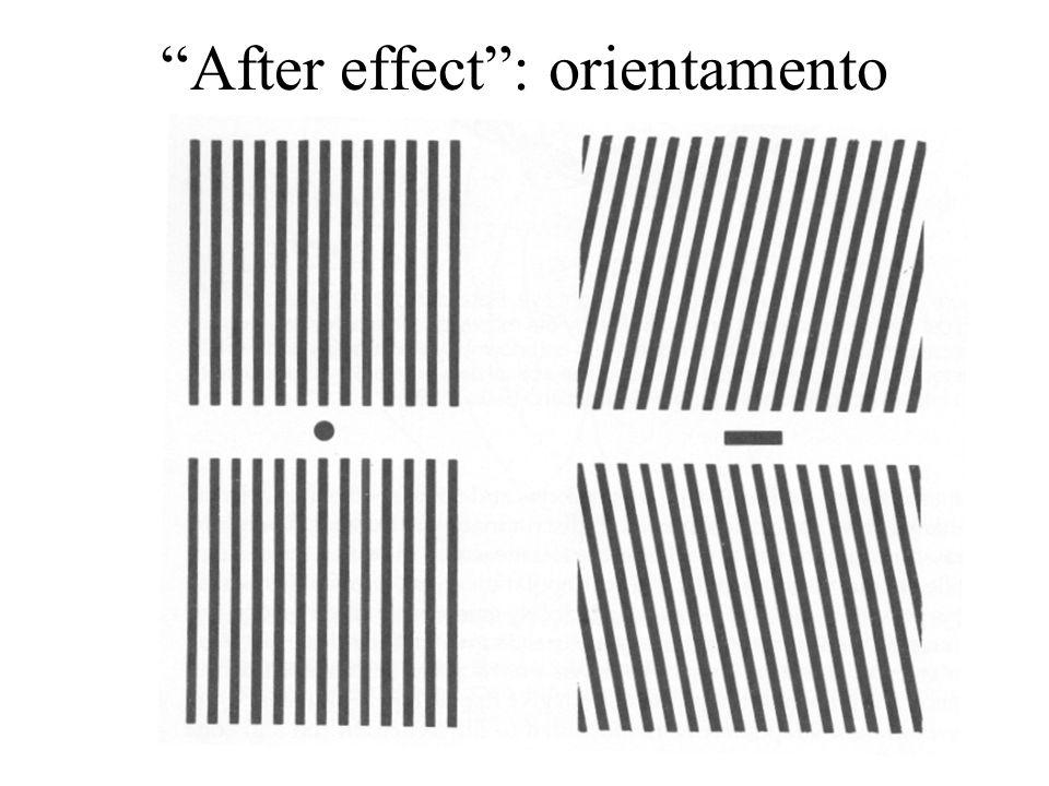 After effect : orientamento