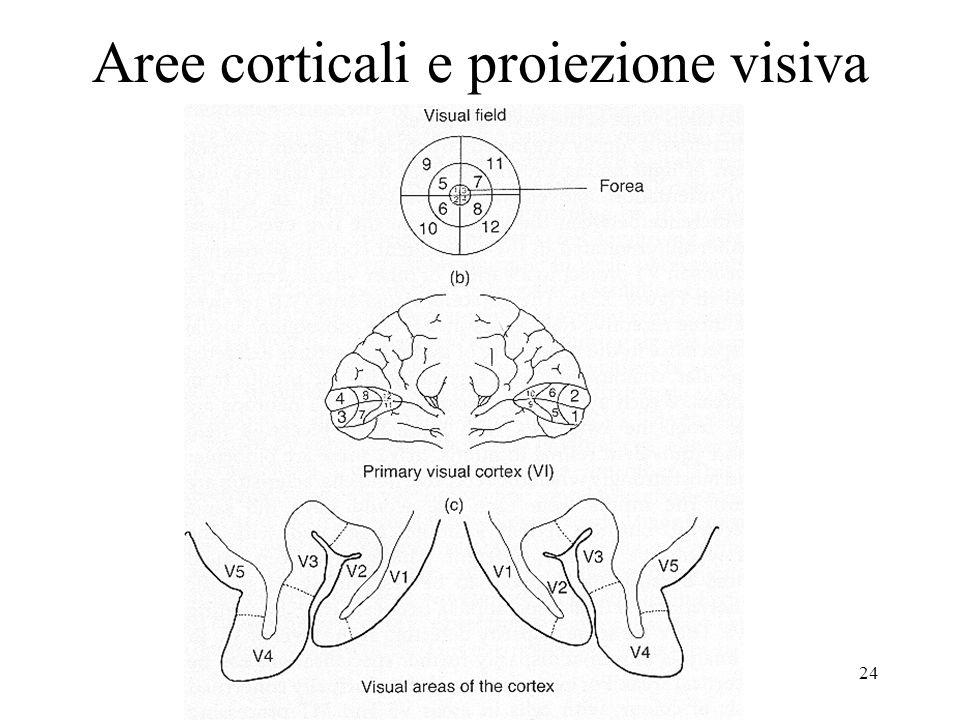 Aree corticali e proiezione visiva