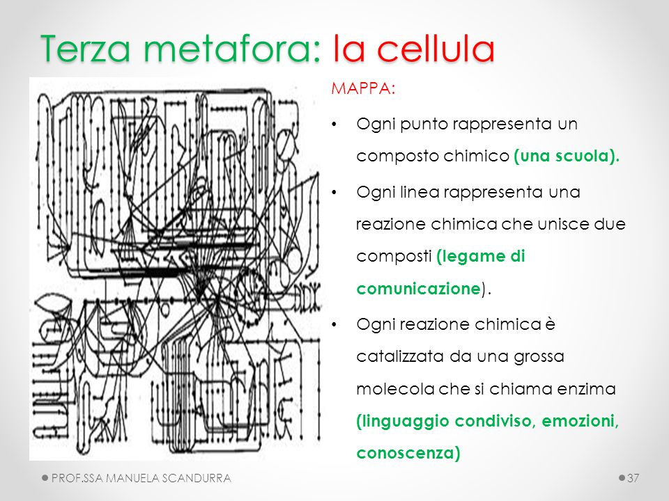 Terza metafora: la cellula