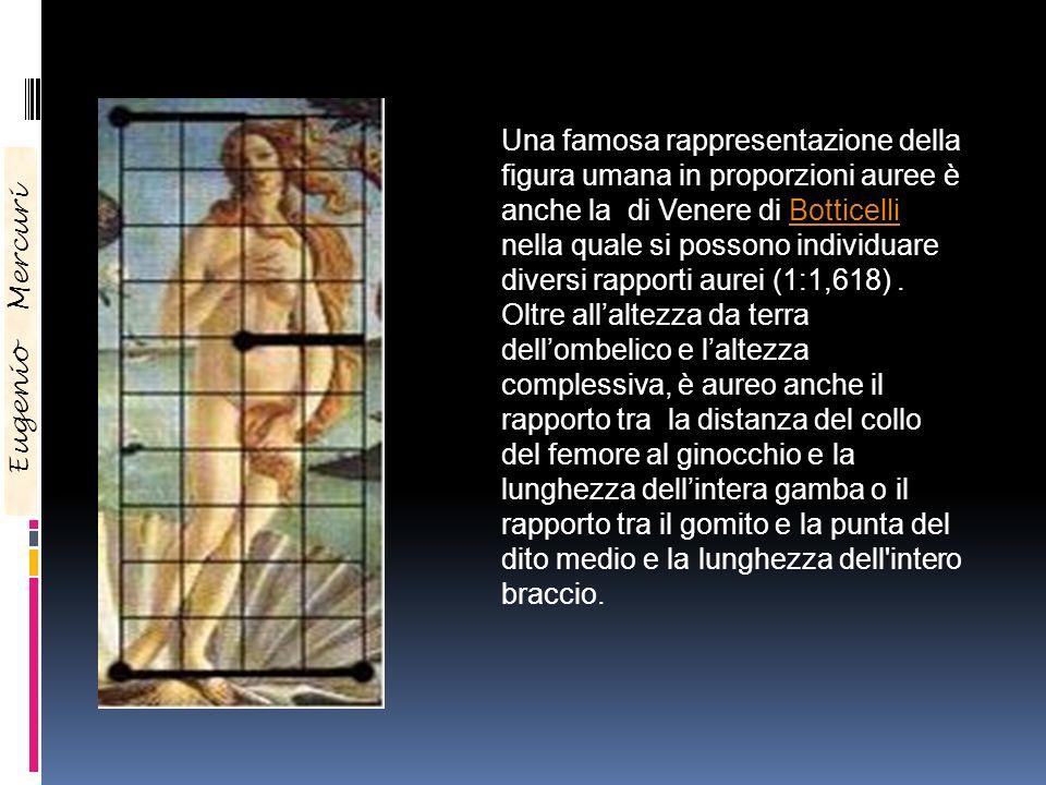 Una famosa rappresentazione della figura umana in proporzioni auree è anche la di Venere di Botticelli nella quale si possono individuare diversi rapporti aurei (1:1,618) . Oltre all'altezza da terra dell'ombelico e l'altezza complessiva, è aureo anche il rapporto tra la distanza del collo del femore al ginocchio e la lunghezza dell'intera gamba o il rapporto tra il gomito e la punta del dito medio e la lunghezza dell intero braccio.