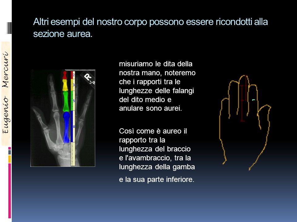 Se Altri esempi del nostro corpo possono essere ricondotti alla sezione aurea.