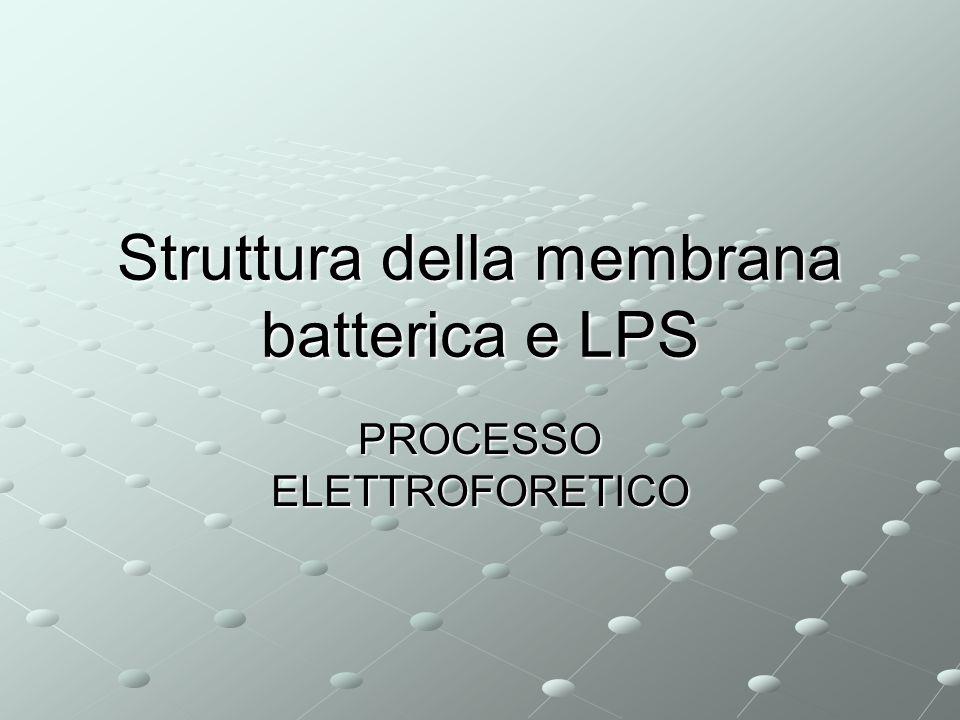 Struttura della membrana batterica e LPS