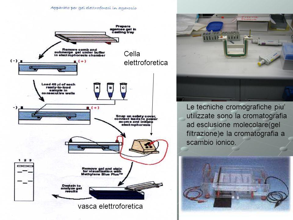 Cella elettroforetica