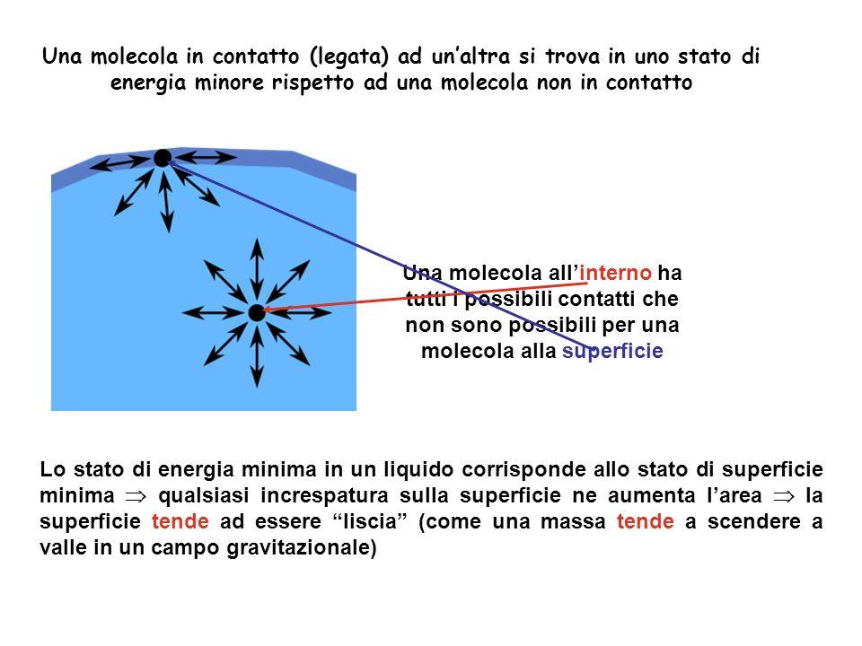 Una molecola in contatto (legata) ad un'altra si trova in uno stato di energia minore rispetto ad una molecola non in contatto