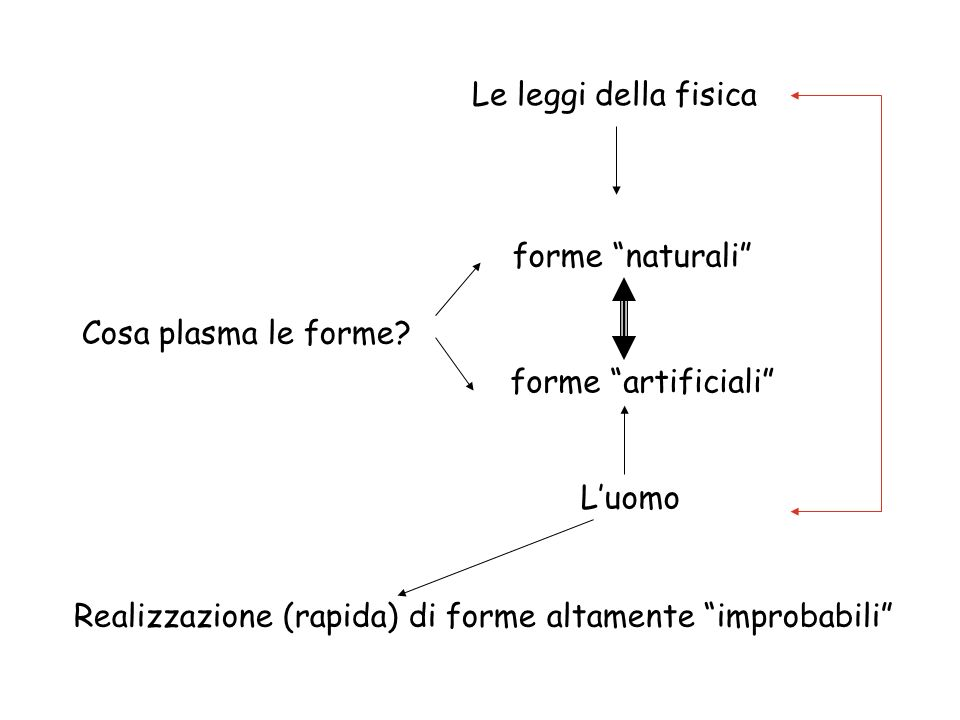 Le leggi della fisicaforme naturali Cosa plasma le forme.