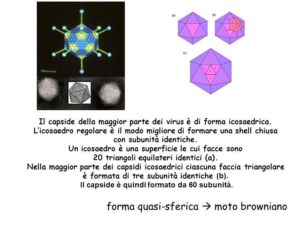 forma quasi-sferica  moto browniano