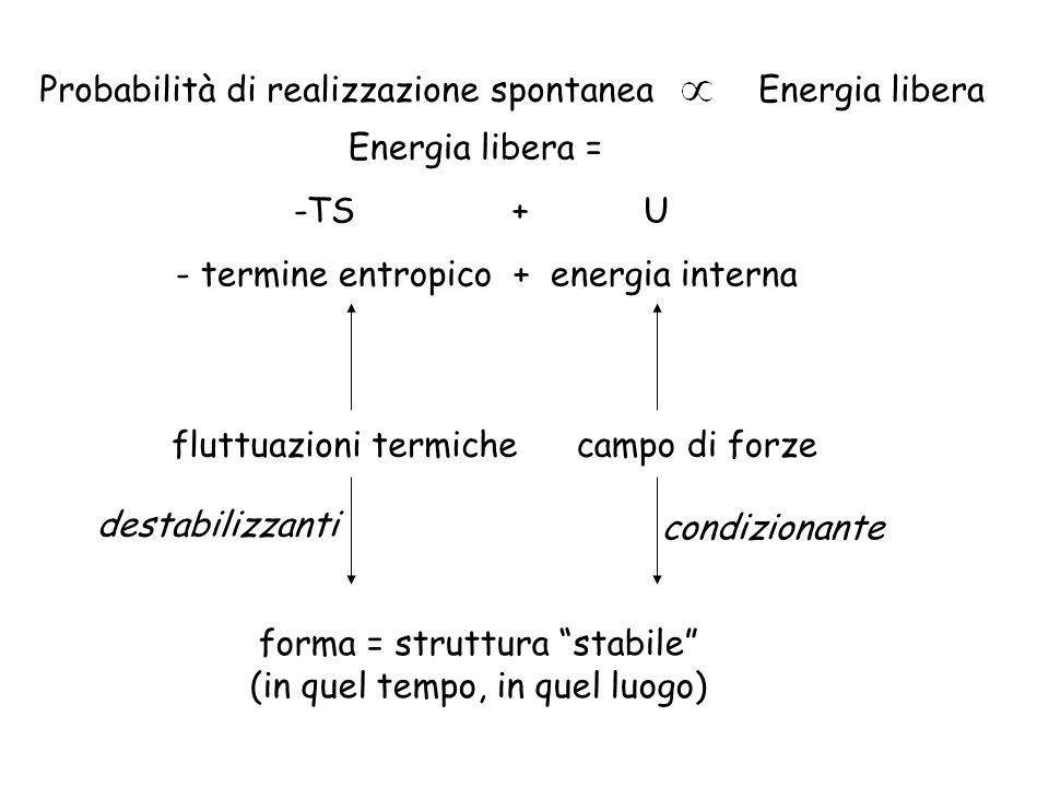 Probabilità di realizzazione spontanea Energia libera