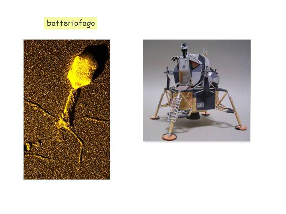 batteriofago