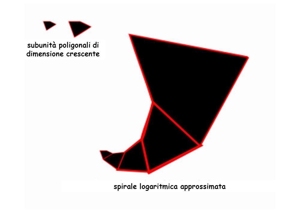 subunità poligonali di dimensione crescente