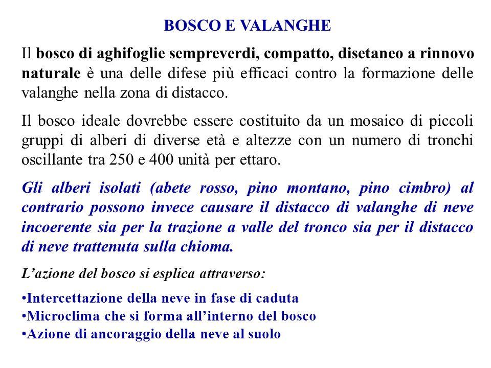 BOSCO E VALANGHE