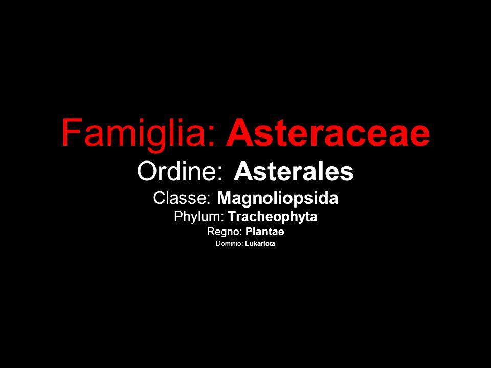 Famiglia: Asteraceae Ordine: Asterales Classe: Magnoliopsida Phylum: Tracheophyta Regno: Plantae Dominio: Eukariota
