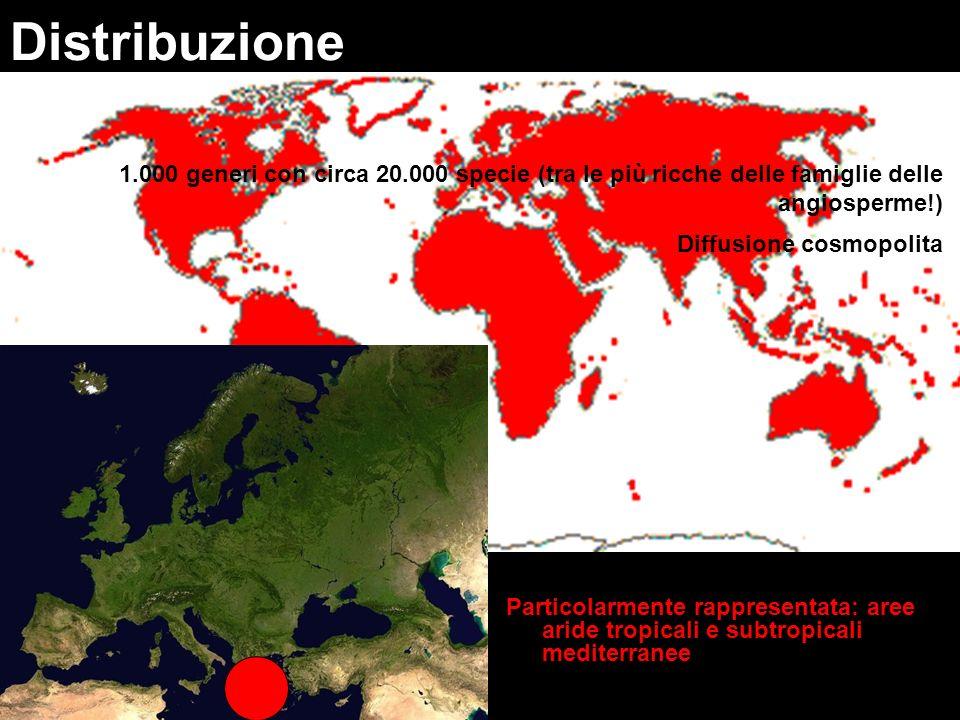 Distribuzione 1.000 generi con circa 20.000 specie (tra le più ricche delle famiglie delle angiosperme!)