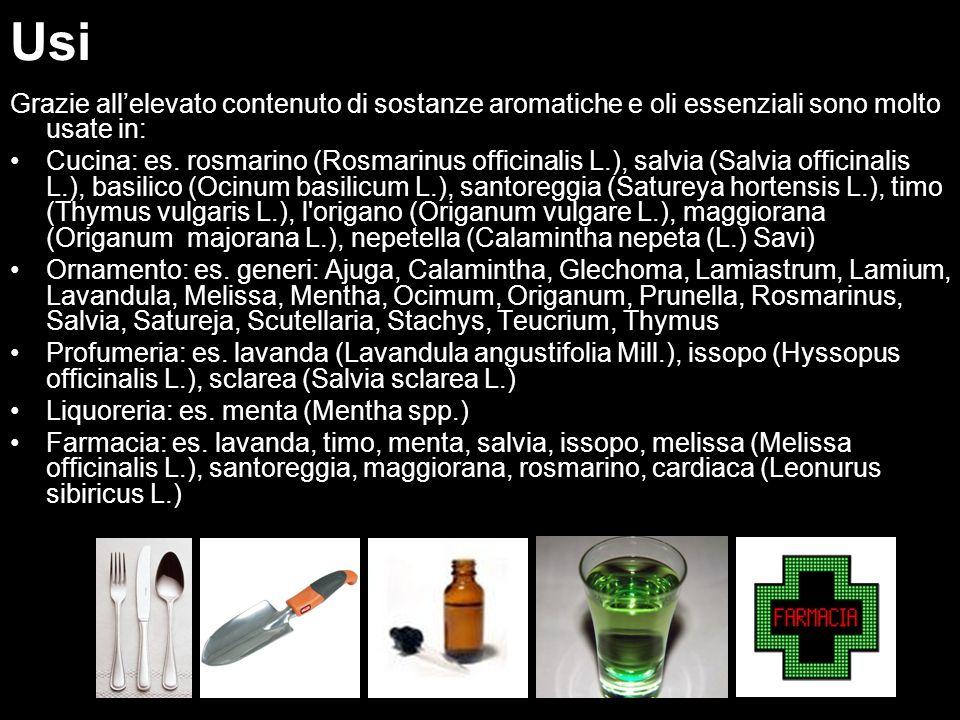 Usi Uso. Grazie all'elevato contenuto di sostanze aromatiche e oli essenziali sono molto usate in: