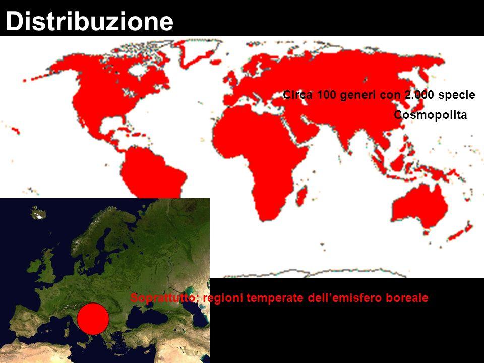 Distribuzione Circa 100 generi con 2.000 specie Cosmopolita