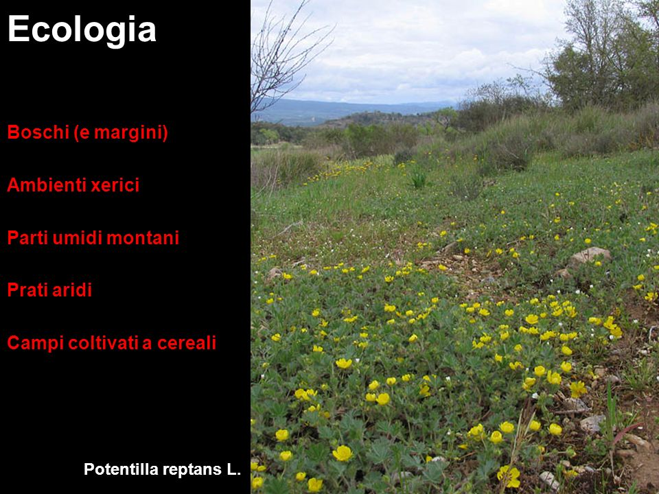 Ecologia Boschi (e margini) Ambienti xerici Parti umidi montani
