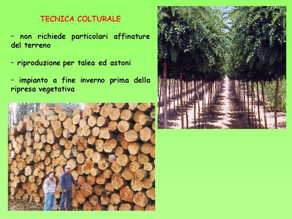 TECNICA COLTURALE – non richiede particolari affinature del terreno. – riproduzione per talea ed astoni.
