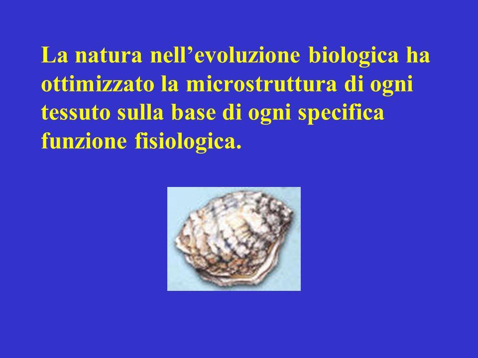 La natura nell'evoluzione biologica ha ottimizzato la microstruttura di ogni tessuto sulla base di ogni specifica funzione fisiologica.